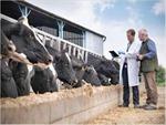 Tác động của thức ăn chăn nuôi biến đổi gen đối với động vật