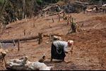 Hạn chế thiệt hại do thiên tai cho miền núi