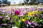 Canberra rực rỡ hội hoa lớn nhất Nam bán cầu