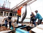 Nhà nước sẽ hỗ trợ kịp thời để ngư dân vươn khơi bám biển