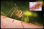 Trung Quốc: Số người mắc sốt xuất huyết tăng mạnh