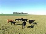 Uruguay cấm nước ngoài mua đất nông nghiệp