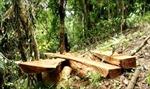 Báo động phá rừng ở khu vực giáp ranh Lâm Đồng - Bình Thuận