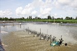ĐBSCL ứng phó với biến đổi khí hậu: Giải pháp cho nông nghiệp