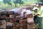 Đình chỉ 7 cán bộ kiểm lâm sau vụ phá rừng Cà Nhông