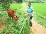 """""""Đòn bẩy"""" giúp nông dân Phú Thọ"""
