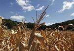 Thiên tai làm nông nghiệp Italy thiệt hại 2,5 tỷ euro