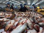 Việt Nam không bán phá giá cá da trơn vào Hoa Kỳ