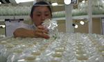 Lâm Đồng phát triển nông nghiệp công nghệ cao