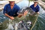Mỹ Latinh coi nuôi trồng thủy sản là công cụ chống đói nghèo