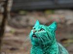 Chú mèo xanh lá cây ở Bulgaria