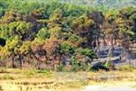 'Bà hỏa' thiêu rụi hơn 4 ha rừng phòng hộ Sóc Sơn