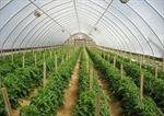 Quy hoạch khu nông nghiệp sinh thái công nghệ cao