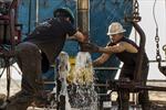 Giá dầu giảm mạnh do OPEC sản xuất vượt hạn ngạch