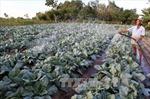 Khảo sát đầu tư nhà máy sản xuất rau sạch