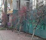 Nhộn nhịp hoa về phố