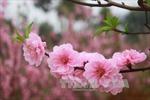 Ngày Xuân đọc câu đối Tết của tiền nhân