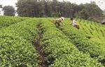 Diện mạo mới sau 4 năm xây dựng nông thôn mới ở Tuyên Quang