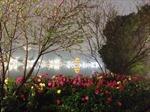 Hồ Gươm huyền ảo đêm cuối năm