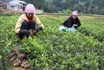 650 ha rừng được trồng trong dịp Tết trồng cây Ất Mùi