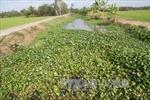 Nước mặn lấn sâu nội đồng Trà Vinh hơn 50 km