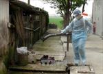 Tại Việt Nam chưa phát hiện chủng virus cúm mới