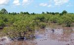 """Ứng phó biến đổi khí hậu ở Đồng bằng sông Cửu Long: Cần sớm có một """"nhạc trưởng"""""""