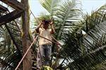 Phòng chống cháy rừng tràm U Minh Thượng