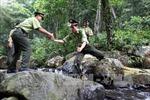 Kháng nghị tăng hình phạt với 14 bị cáo cướp gỗ sưa tại Phong Nha-Kẻ Bàng