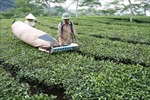 Ngành nông nghiệp gỡ khó cho xuất khẩu