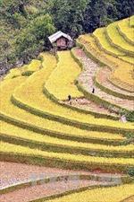 Triển lãm 'Việt Nam 25 năm một đất nước đang thay đổi'
