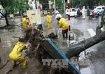 Gió xoáy bẻ gãy nhiều cây xanh tại Lào Cai