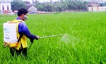 Hỗ trợ 1 triệu đồng/ha/năm cho đất trồng lúa nước