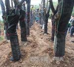 Hà Nội kêu gọi người dân tố cáo hành vi xâm hại cây xanh
