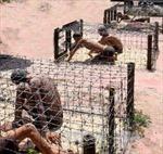 Nhà tù Phú Quốc - 'Địa ngục trần gian'