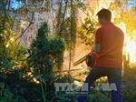 Bắc Giang: Cháy rừng, một người thiệt mạng