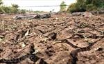 Đắk Lắk nắng nóng kéo dài, thiệt hại nhiều tỷ đồng