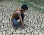 Nông dân lao đao vì nắng hạn