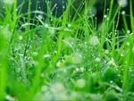 Hương cỏ