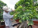 Agribank giúp doanh nhân, hộ gia đình gắn bó với nông nghiệp