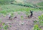 Điện Biên 'kêu than' không trồng nổi rừng