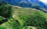 Ruộng bậc thang ở Philippines trước nguy cơ biến mất