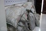 Bắt nhóm cướp 5 tấn da lông chồn tiền tỷ