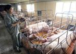 Giải pháp mới giúp giảm chi phí cho người chăn nuôi