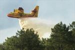 Cháy rừng nghiêm trọng tại Pháp và Albania