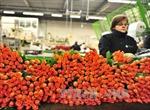 Nga cấm nhập khẩu hoa Hà Lan