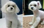Hàn Quốc sốt phẫu thuật thẩm mỹ cho thú cưng