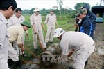 Phát hiện quả đạn pháo 860 kg nguyên kíp nổ tại Quảng Trị