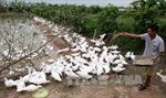 Agribank chung tay xây dựng nông thôn mới