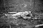 Trận chiến đẫm máu nhất của Mỹ trong Thế chiến 2 - Kỳ cuối